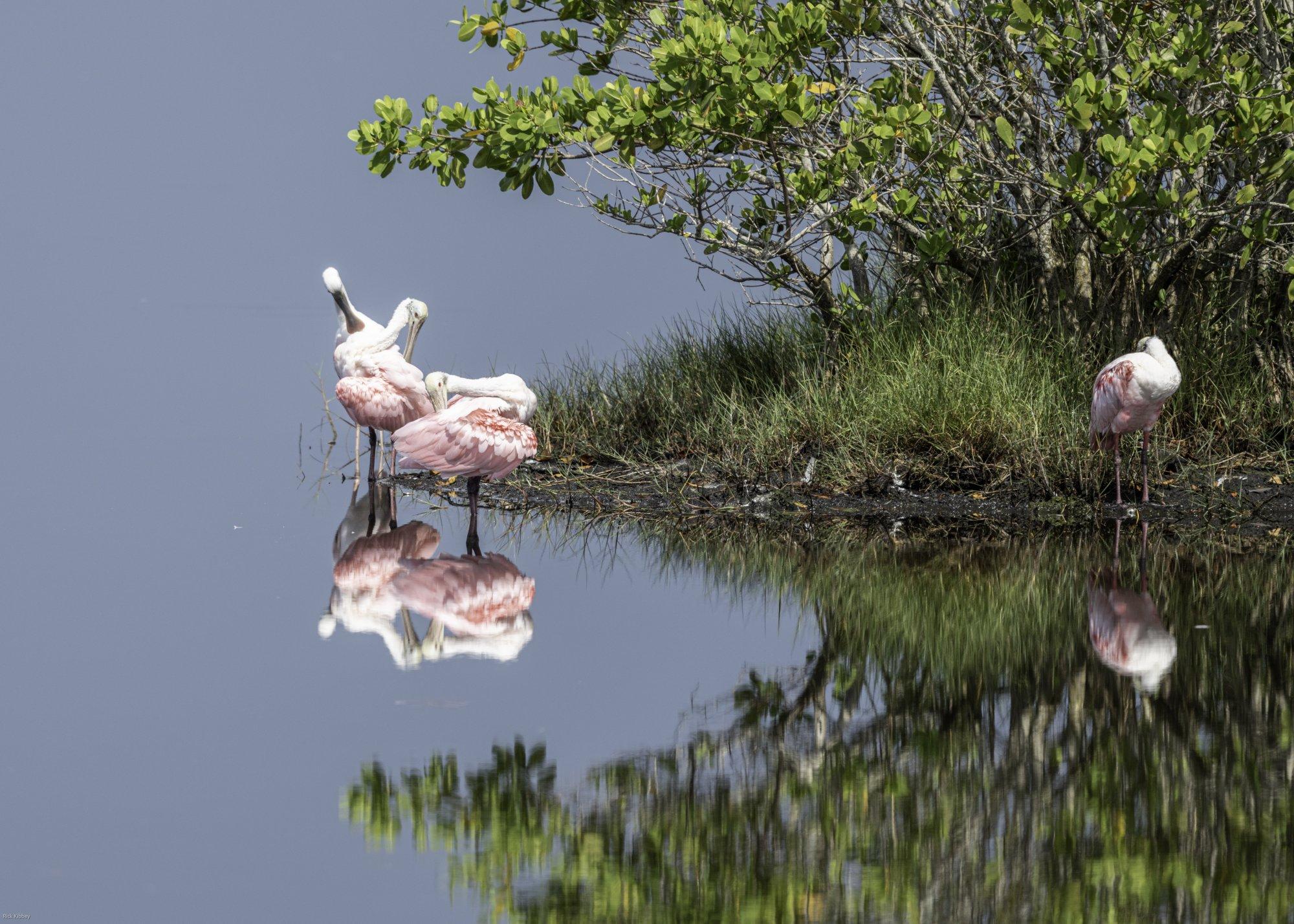 210612 MI Wetlands-163-2.jpg