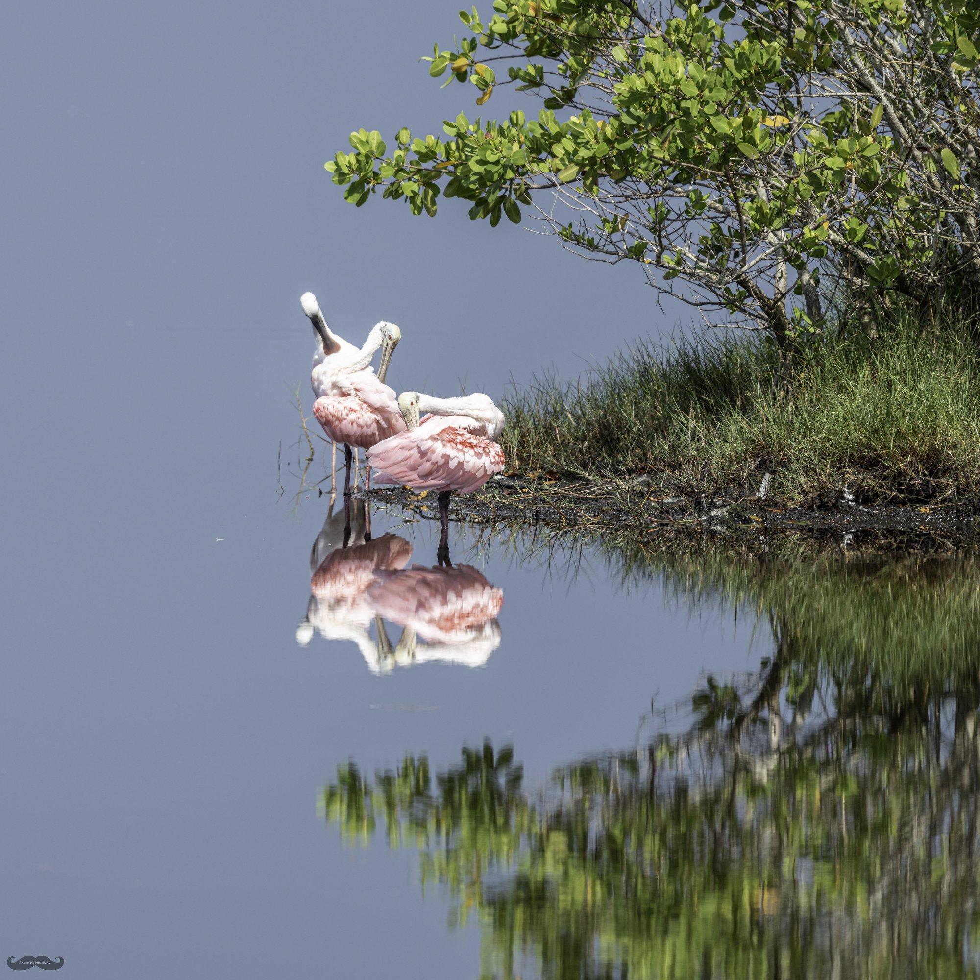 210612 MI Wetlands-163-5.jpg