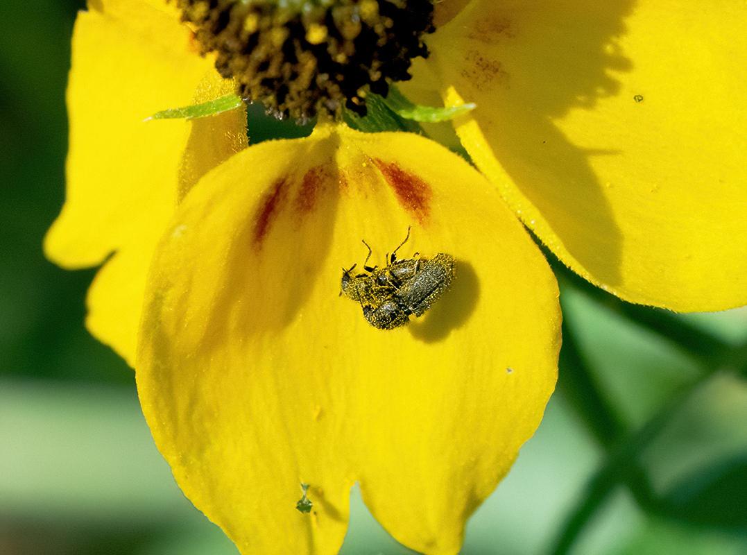gnarly insect DSC02564-denoise-denoise.jpg